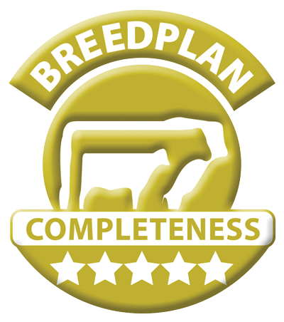 Mount Difficult Poll Hereford Stud - 5 star Breedplan Completeness